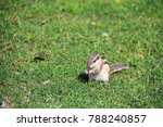 A Chipmunk Eating Fruit On Grass