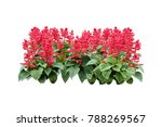 red flowers bush tree isolated... | Shutterstock . vector #788269567