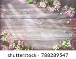 spring blooming branches on... | Shutterstock . vector #788289547