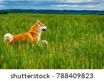 dog in a field with tall grass. ... | Shutterstock . vector #788409823