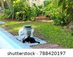 house courtyard and the garden...   Shutterstock . vector #788420197