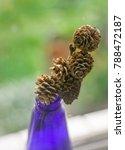 pine cone in the blue vase | Shutterstock . vector #788472187