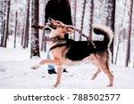 cute dog playfully running and... | Shutterstock . vector #788502577