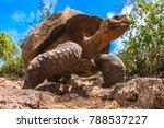 The Galapagos Islands. Ecuador...