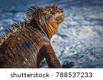 the galapagos islands. ecuador. ... | Shutterstock . vector #788537233