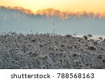 beautiful winter landscape. dry ... | Shutterstock . vector #788568163