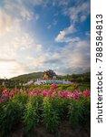pink flower gardens with hor... | Shutterstock . vector #788584813