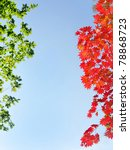 Fall Red Maple Leaves In The...