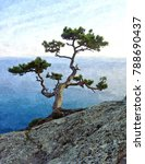 Lonely Pine Tree On The Cliff...