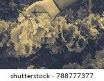 gardening  weeding weeds....   Shutterstock . vector #788777377