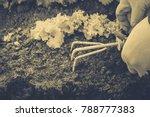 gardening  weeding weeds....   Shutterstock . vector #788777383