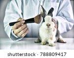 Cosmetics Test Rabbit Animal Scientist - Fine Art prints