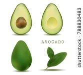 realistic vector avocados... | Shutterstock .eps vector #788830483