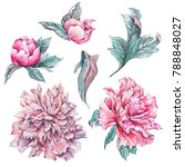 set of vintage watercolor pink... | Shutterstock . vector #788848027