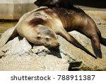 Close Up Photo Of Sea Calf...