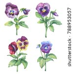 set of the garden pansy flower  ... | Shutterstock . vector #788953057