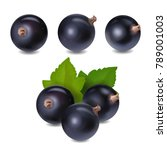 blackcurrant berry realistic 3d ... | Shutterstock .eps vector #789001003