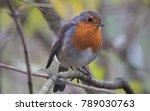 english robin leighton moss | Shutterstock . vector #789030763