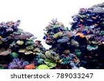 Coral Reef On White Isolated...