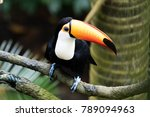 bright toucan on branch | Shutterstock . vector #789094963