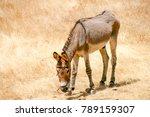 Skinny Donkey Under The Sun At...