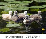 Young Swans In The Green Grass