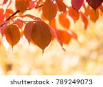 red autumn leaves  very shallow ... | Shutterstock . vector #789249073