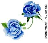 wildflower blue rose flower in...   Shutterstock . vector #789405583