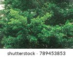 beautiful bright green leave ... | Shutterstock . vector #789453853