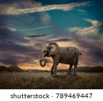 elephant with trunks and big... | Shutterstock . vector #789469447