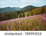 location carpathian national... | Shutterstock . vector #789592513