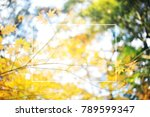 blur park with nature. | Shutterstock . vector #789599347