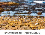 seagulls  seaweed and rock... | Shutterstock . vector #789606877