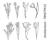 tulip vector illustration   Shutterstock .eps vector #789675913