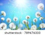 airy dandelions glow in the sun ... | Shutterstock . vector #789676333