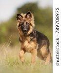 healthy purebred dog... | Shutterstock . vector #789708973