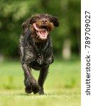healthy purebred dog... | Shutterstock . vector #789709027