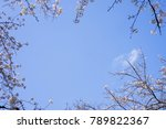 blue sky background with cherry ...   Shutterstock . vector #789822367
