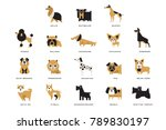 collection of different dogs... | Shutterstock .eps vector #789830197