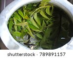 asian traditional herbal leaf... | Shutterstock . vector #789891157