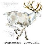 caribou. reindeer watercolor... | Shutterstock . vector #789922213