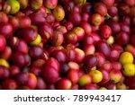 coffee cherry in coffee... | Shutterstock . vector #789943417