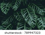 green leaves. low key modern... | Shutterstock . vector #789947323