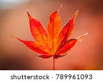maple color change in winter in ... | Shutterstock . vector #789961093