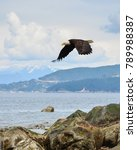 Stock photo a bald eagle takes flight at vancouver s acadia beach with west vancouver visible in the 789988387