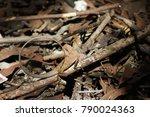 chameleon lizard snake   Shutterstock . vector #790024363