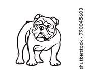 English Bulldog   Isolated...