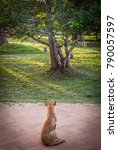 Small photo of Stray street dog staring as tree full of monkeys stare back in a park during sunset