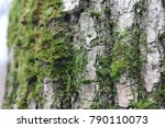 highly detailed old oak tree... | Shutterstock . vector #790110073
