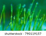 dew drops on a morning grass... | Shutterstock . vector #790119157